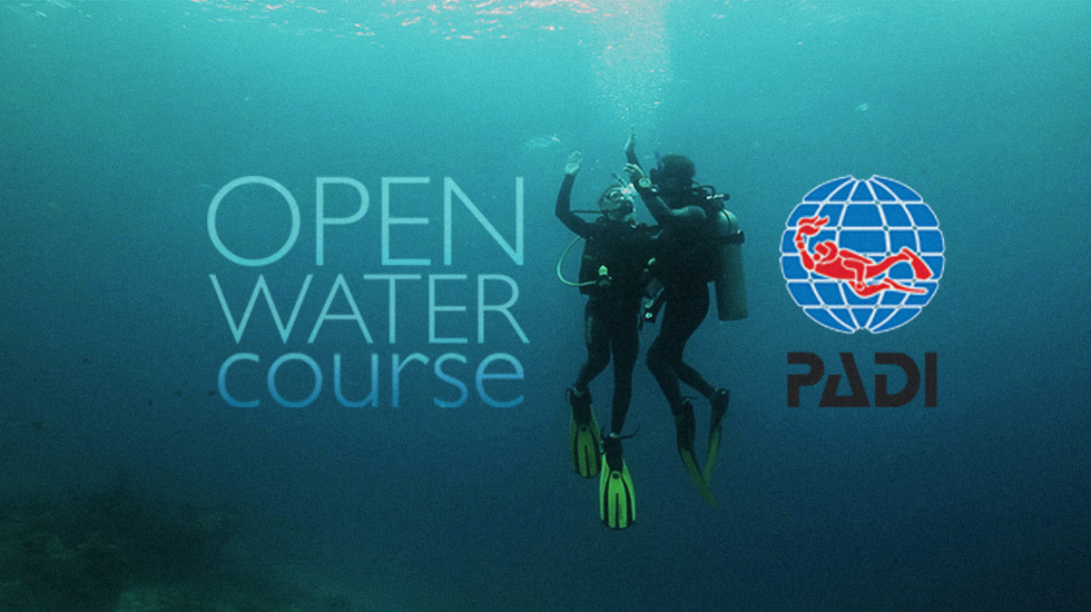 Padi Scuba Diver Certification Course Godiving